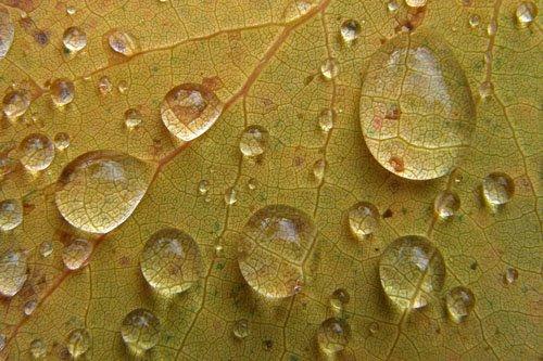 Qué buscas en cada gota de lluvia
