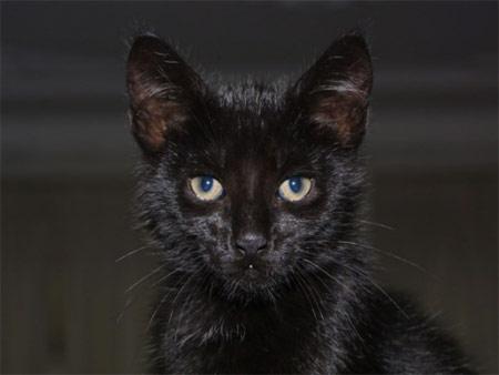 Gatito negro mirando a la cámara