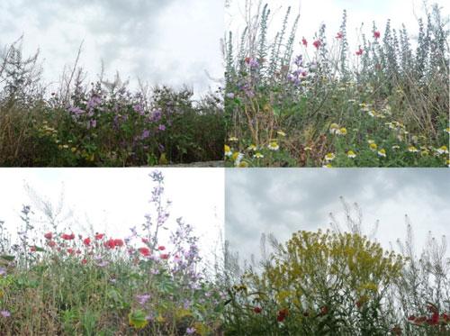 Cuatro imágenes del campo: matas y flores