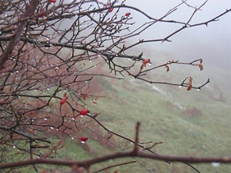 Árbol sin hojas bajo la lluvia